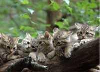 5 kleine Wildkatzen